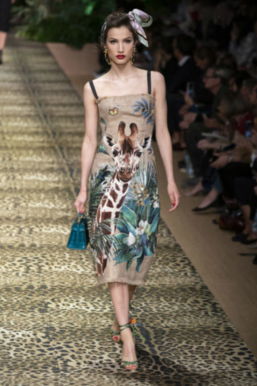 Dolce and Gabbana Dresses,dolce and gabbana dress,